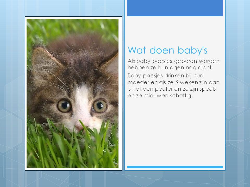 Wat doen baby's Als baby poesjes geboren worden hebben ze hun ogen nog dicht. Baby poesjes drinken bij hun moeder en als ze 6 weken zijn dan is het ee