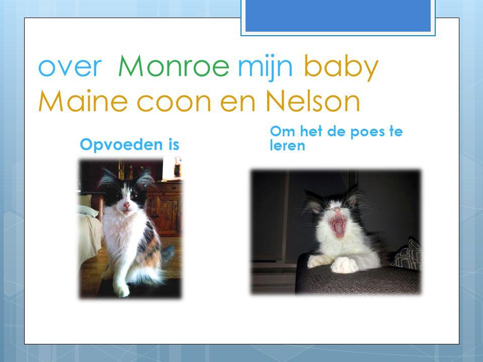 over Monroe mijn baby Maine coon en Nelson Opvoeden is Om het de poes te leren