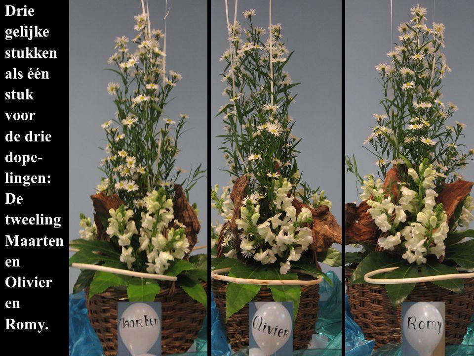 Het handvormige blad is Gods hand waarin jullie, de witte bloemen schuilen en gedragen worden.