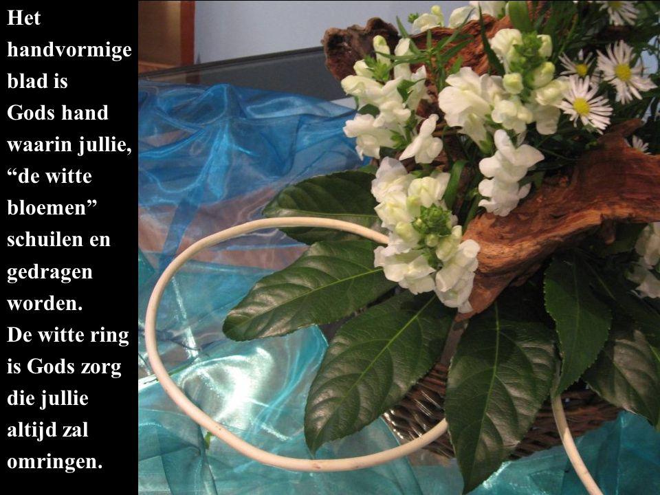 """Het handvormige blad is Gods hand waarin jullie, """"de witte bloemen"""" schuilen en gedragen worden. De witte ring is Gods zorg die jullie altijd zal omri"""