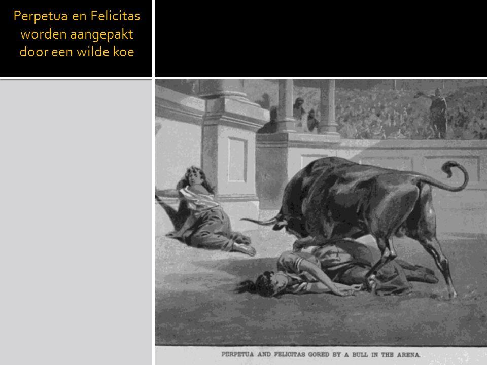 Perpetua en Felicitas worden aangepakt door een wilde koe