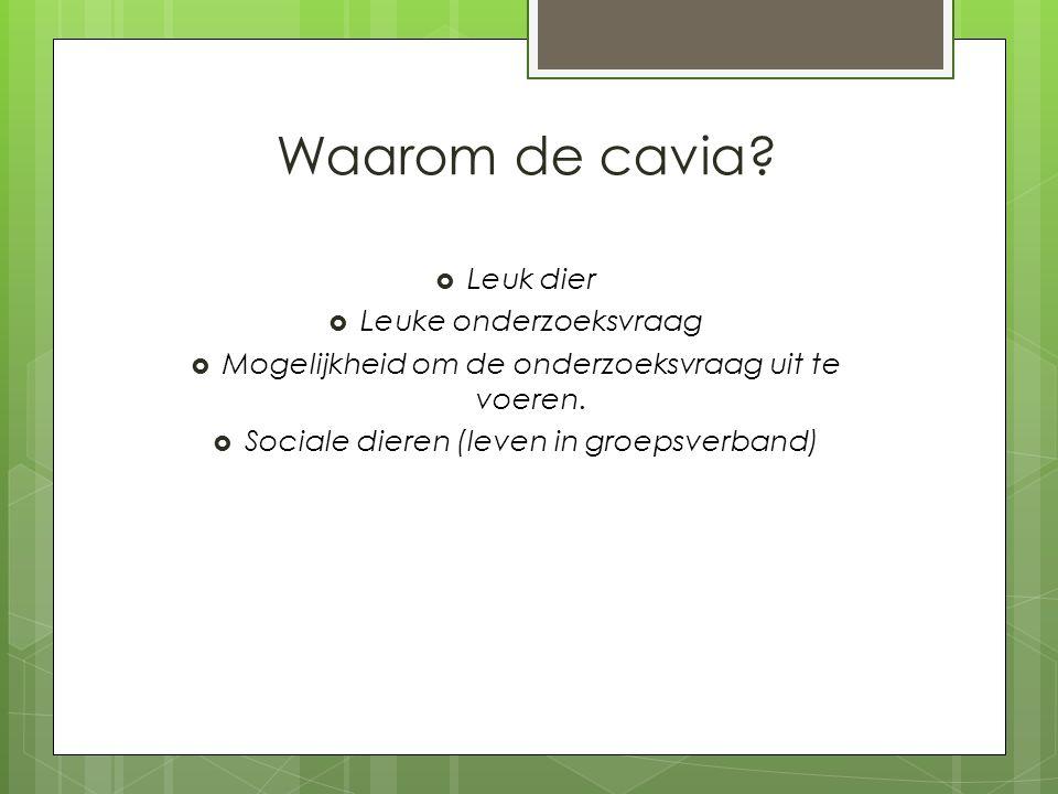 Waarom de cavia?  Leuk dier  Leuke onderzoeksvraag  Mogelijkheid om de onderzoeksvraag uit te voeren.  Sociale dieren (leven in groepsverband)