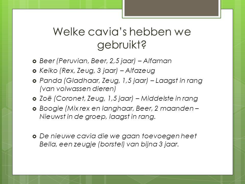 Welke cavia's hebben we gebruikt?  Beer (Peruvian, Beer, 2,5 jaar) – Alfaman  Keiko (Rex, Zeug, 3 jaar) – Alfazeug  Panda (Gladhaar, Zeug, 1,5 jaar