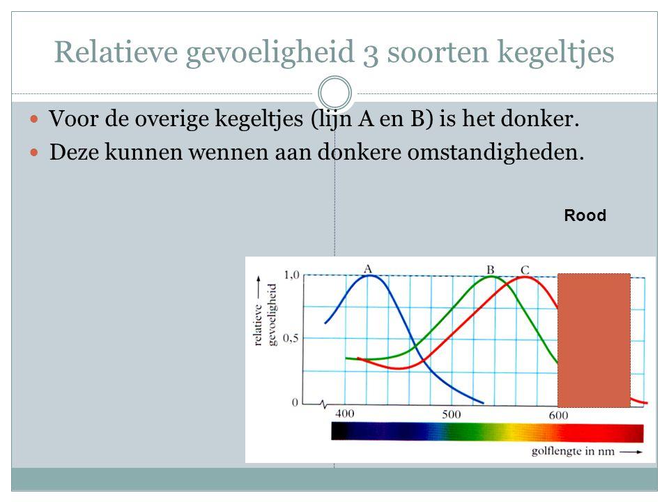 Relatieve gevoeligheid 3 soorten kegeltjes Voor de overige kegeltjes (lijn A en B) is het donker. Deze kunnen wennen aan donkere omstandigheden. Rood