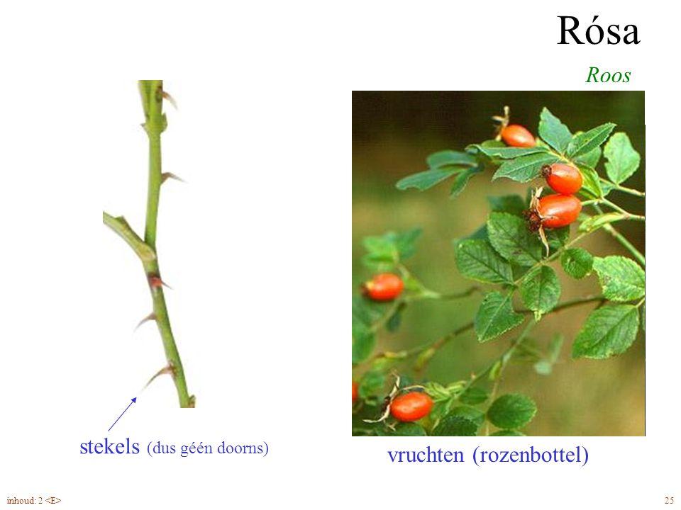 Rósa Roos geveerd blad steunbladen stekels (dus géén doorns) bloem vijftallig vruchten (rozenbottel) 25inhoud: 2