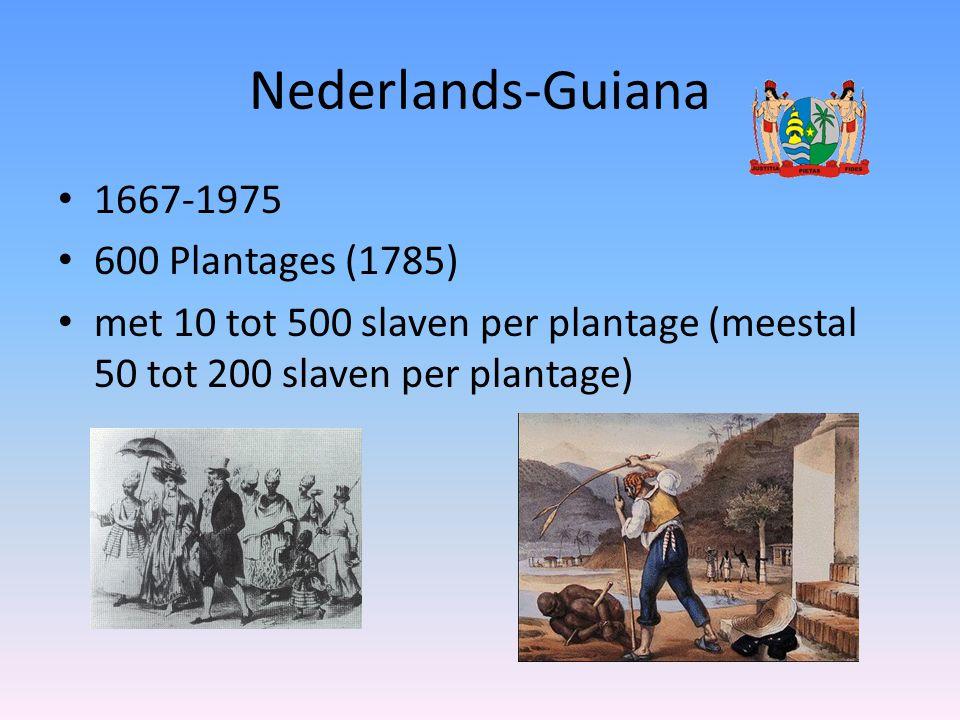 Nederlands-Guiana 1667-1975 600 Plantages (1785) met 10 tot 500 slaven per plantage (meestal 50 tot 200 slaven per plantage)