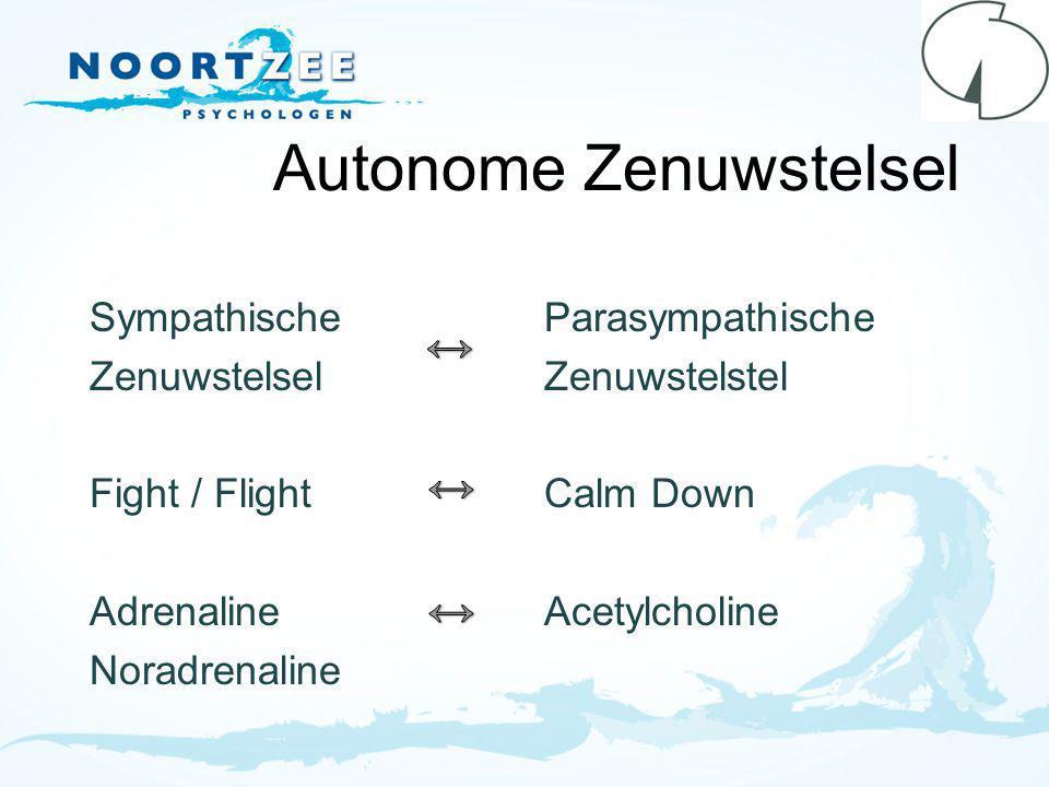 Autonome Zenuwstelsel Sympathische Zenuwstelsel Fight / Flight Adrenaline Noradrenaline Parasympathische Zenuwstelstel Calm Down Acetylcholine