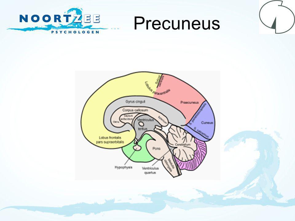 Precuneus