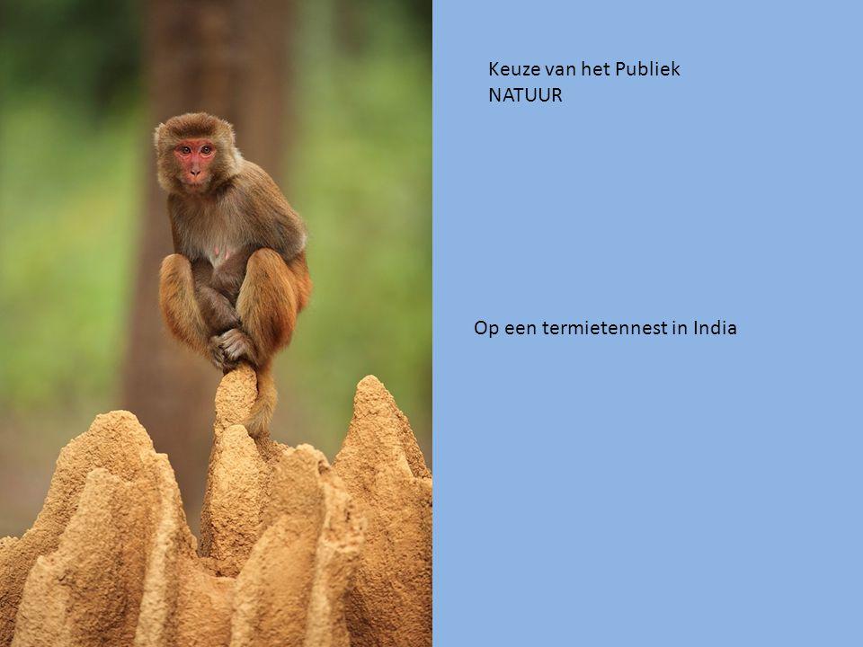 Keuze van het Publiek NATUUR Op een termietennest in India