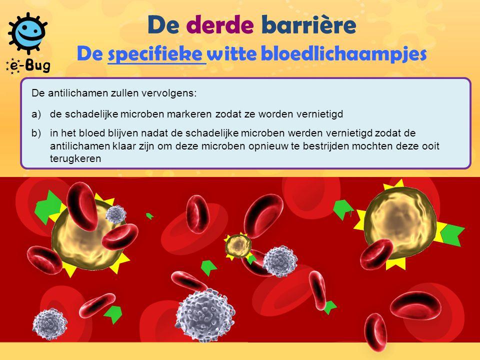 De derde barrière De specifieke witte bloedlichaampjes De antilichamen zullen vervolgens: a)de schadelijke microben markeren zodat ze worden vernietigd b)in het bloed blijven nadat de schadelijke microben werden vernietigd zodat de antilichamen klaar zijn om deze microben opnieuw te bestrijden mochten deze ooit terugkeren