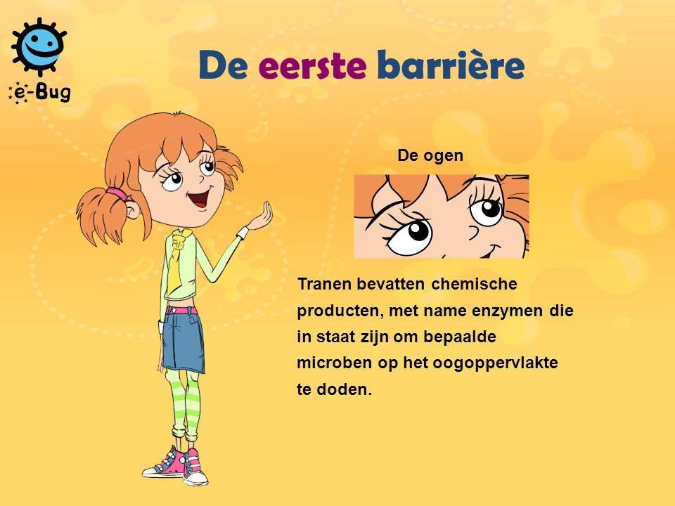 De eerste barrière De ogen Tranen bevatten chemische producten, met name enzymen die in staat zijn om bepaalde microben op het oogoppervlakte te doden.