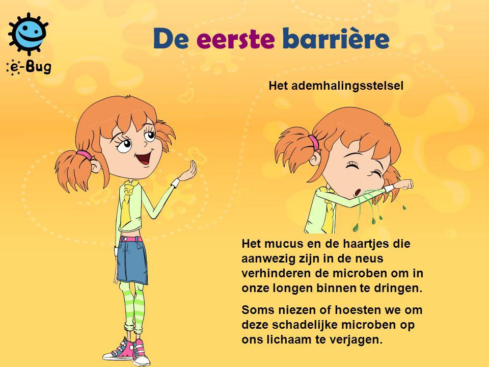 De eerste barrière Het ademhalingsstelsel Het mucus en de haartjes die aanwezig zijn in de neus verhinderen de microben om in onze longen binnen te dringen.