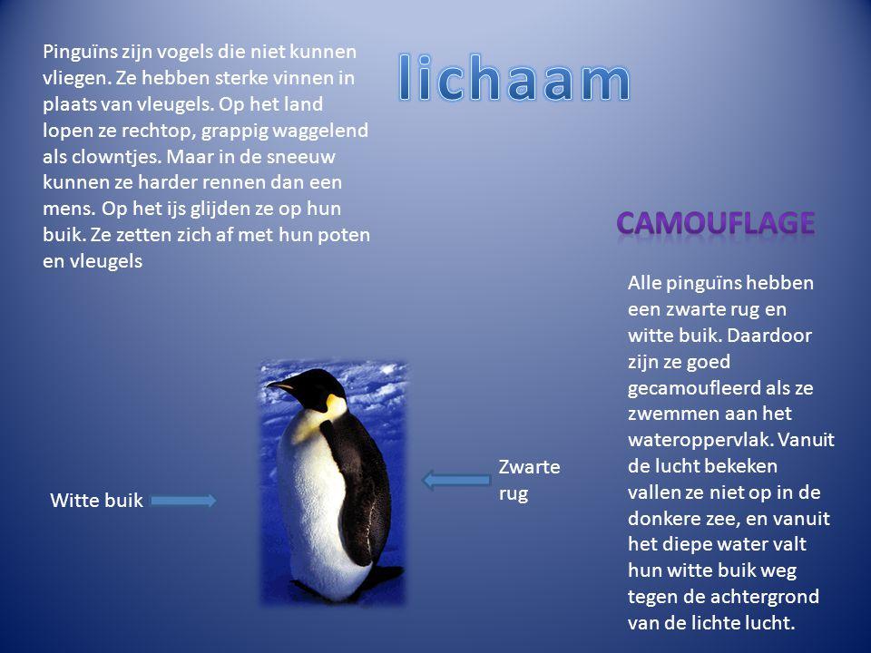 Pinguïns zijn vogels die niet kunnen vliegen. Ze hebben sterke vinnen in plaats van vleugels. Op het land lopen ze rechtop, grappig waggelend als clow