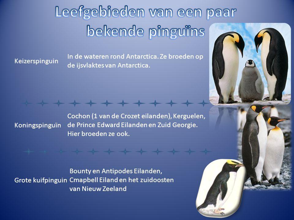 Keizerspinguin In de wateren rond Antarctica. Ze broeden op de ijsvlaktes van Antarctica. Koningspinguïn Cochon (1 van de Crozet eilanden), Kerguelen,
