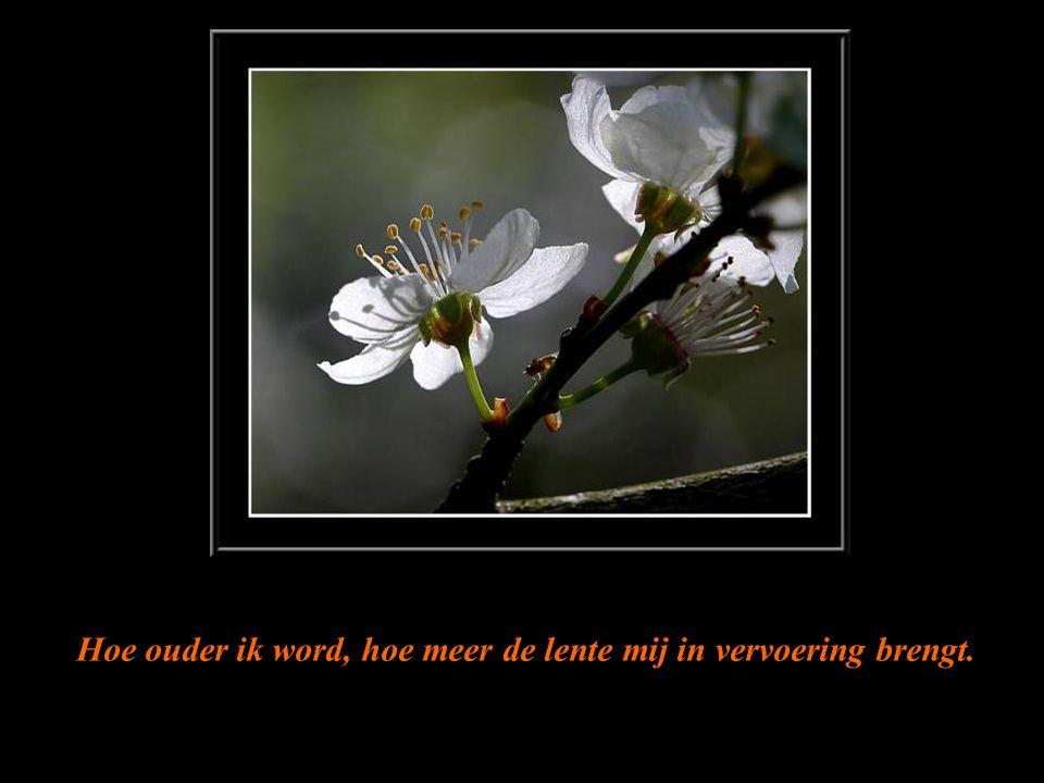 muziek 'Jardin Secret' Richard Clayderman Bij elk begin van de lente denk ik eraan, dat een eenvoudige blik op een bloem je een geluksdag kan bezorgen …