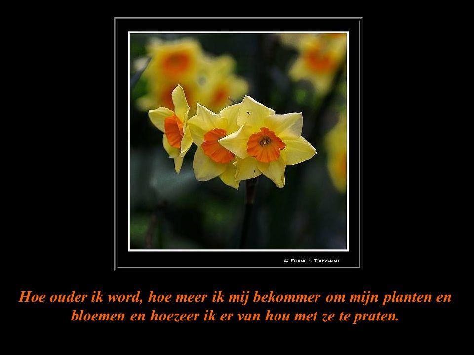 Hoe ouder ik word, hoe meer ik mij bekommer om mijn planten en bloemen en hoezeer ik er van hou met ze te praten.