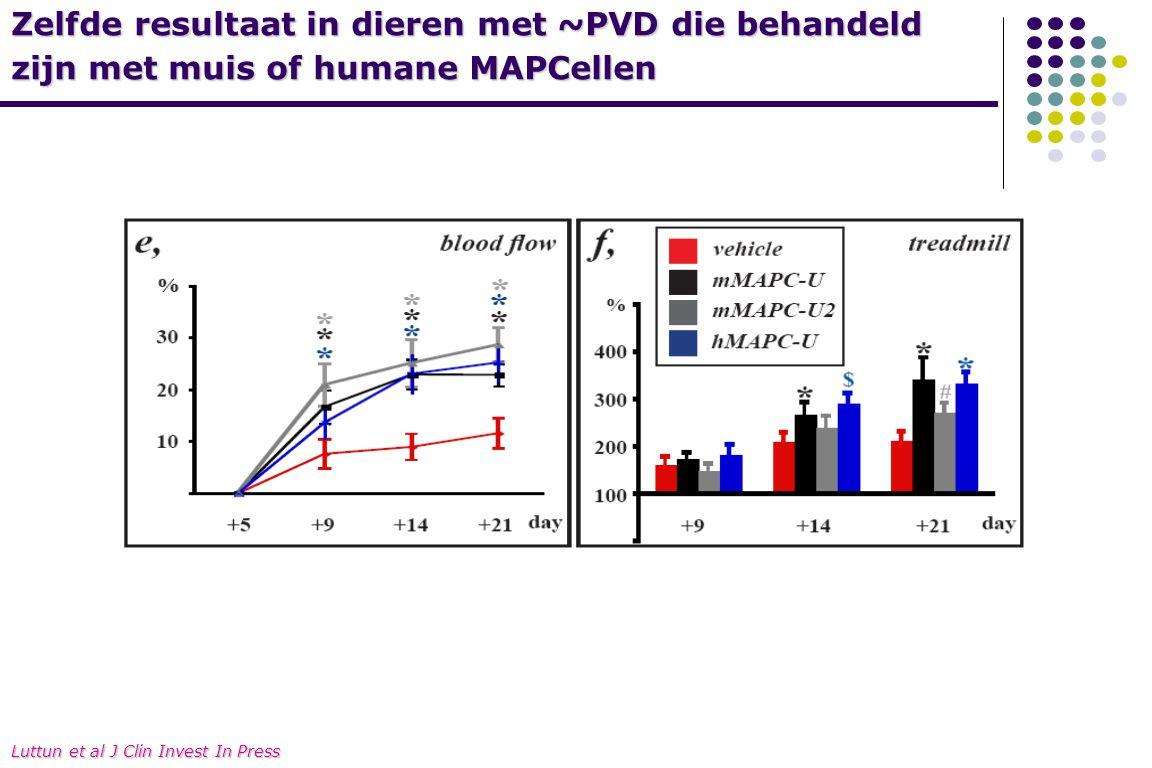 Zelfde resultaat in dieren met ~PVD die behandeld zijn met muis of humane MAPCellen mMAPC1 mMAPC2hMAPC Luttun et al J Clin Invest In Press