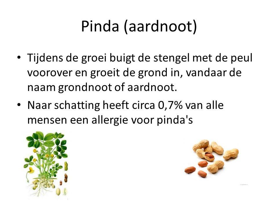 Pinda (aardnoot) Tijdens de groei buigt de stengel met de peul voorover en groeit de grond in, vandaar de naam grondnoot of aardnoot. Naar schatting h