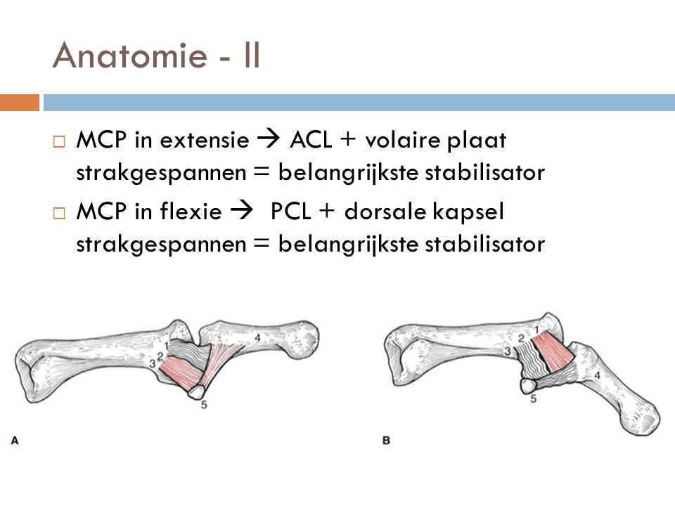 Anatomie - II  MCP in extensie  ACL + volaire plaat strakgespannen = belangrijkste stabilisator  MCP in flexie  PCL + dorsale kapsel strakgespanne