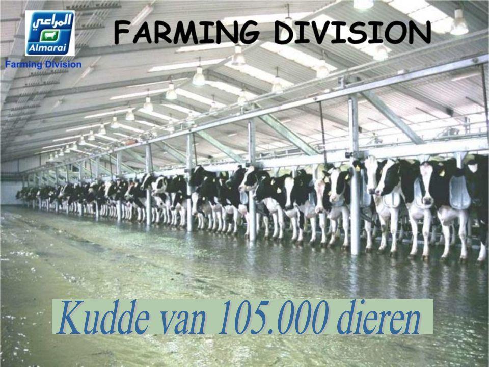 2 oogsten per jaar 110 ton per hectare