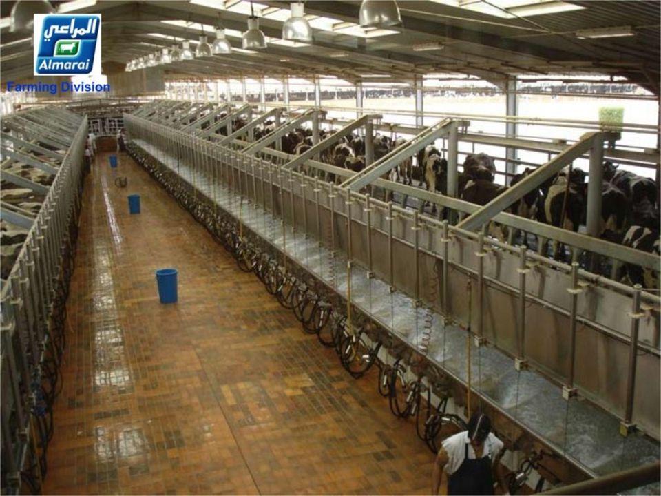 Koeien drogen in 15 minuten