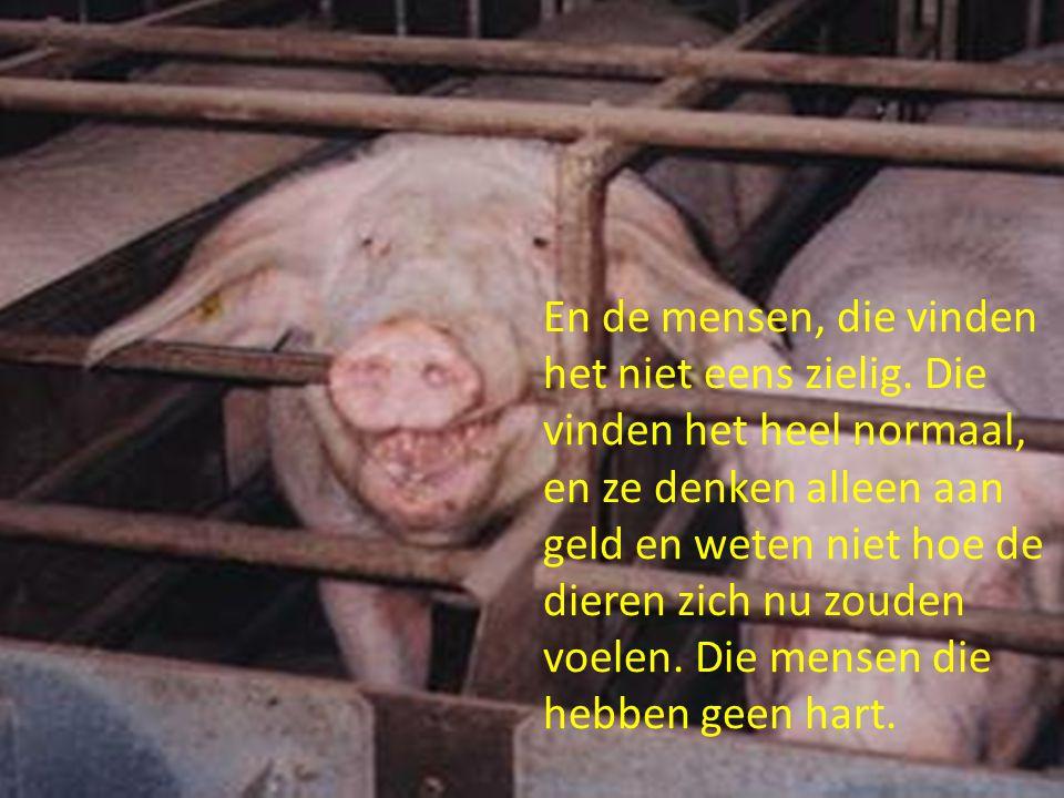 En het is niet alleen bij varkens bij koeien en kippen gaat het ook zo