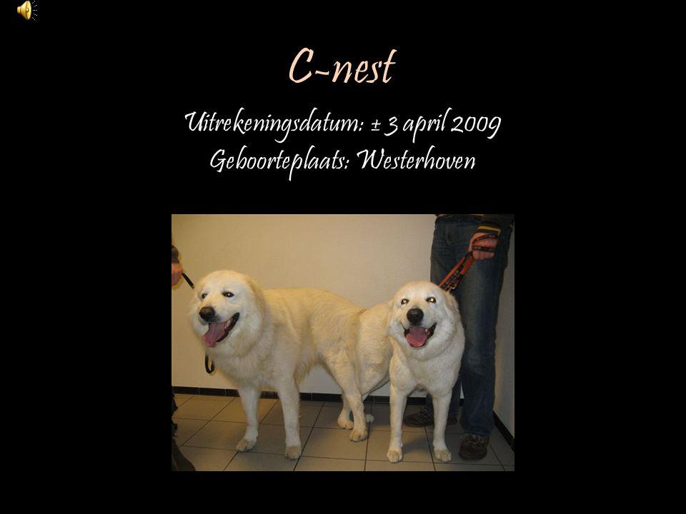 C-nest Uitrekeningsdatum: ± 3 april 2009 Geboorteplaats: Westerhoven