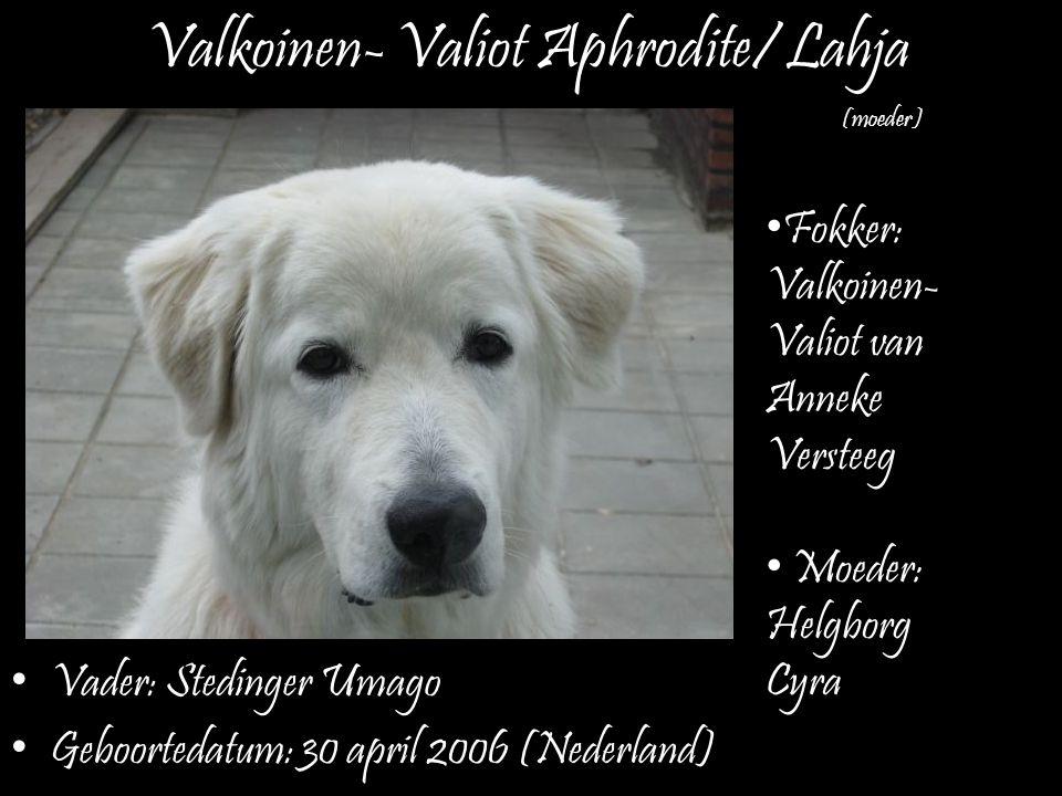 Valkoinen- Valiot Aphrodite/ Lahja Vader: Stedinger Umago Geboortedatum: 30 april 2006 (Nederland) (moeder) Fokker: Valkoinen- Valiot van Anneke Verst