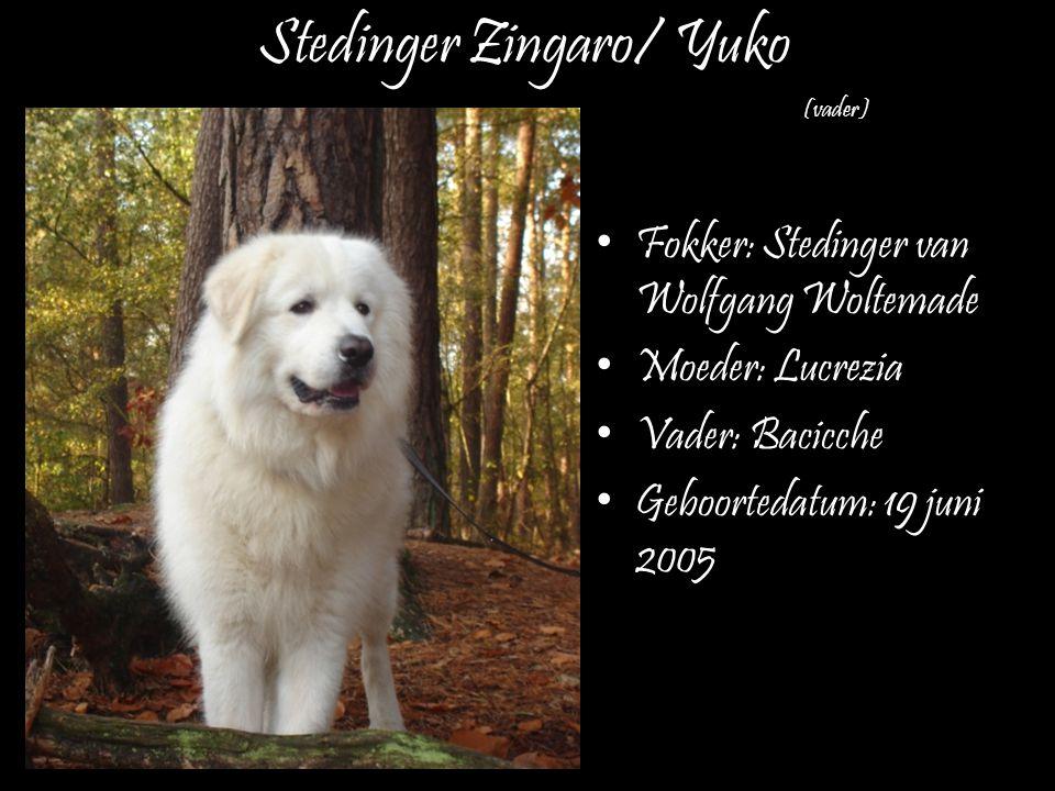 Stedinger Zingaro/ Yuko Fokker: Stedinger van Wolfgang Woltemade Moeder: Lucrezia Vader: Bacicche Geboortedatum: 19 juni 2005 (vader)