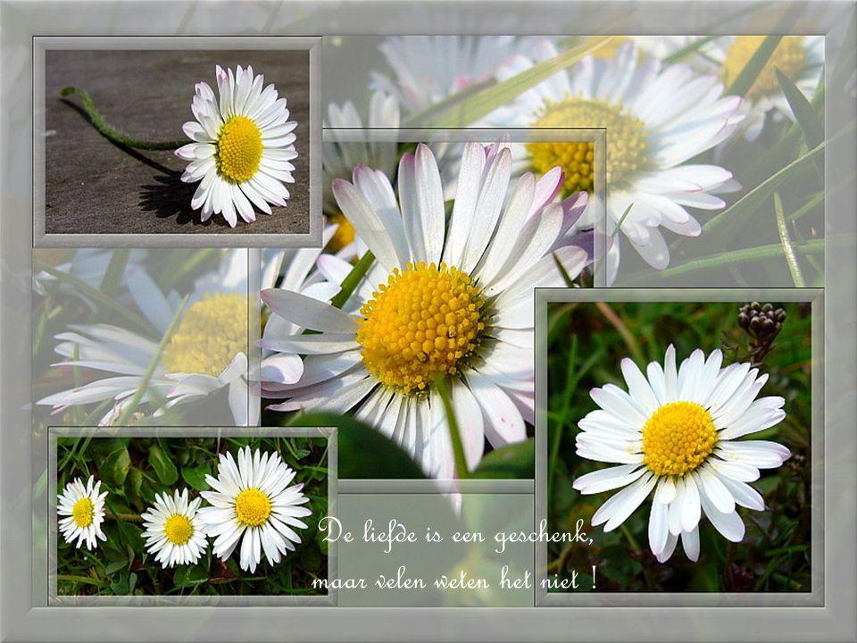 Het leven is een tuin vol bloemen van vreugde, tevredenheid en gelegenheden van geluk. Vergeet niet om ze te plukken !