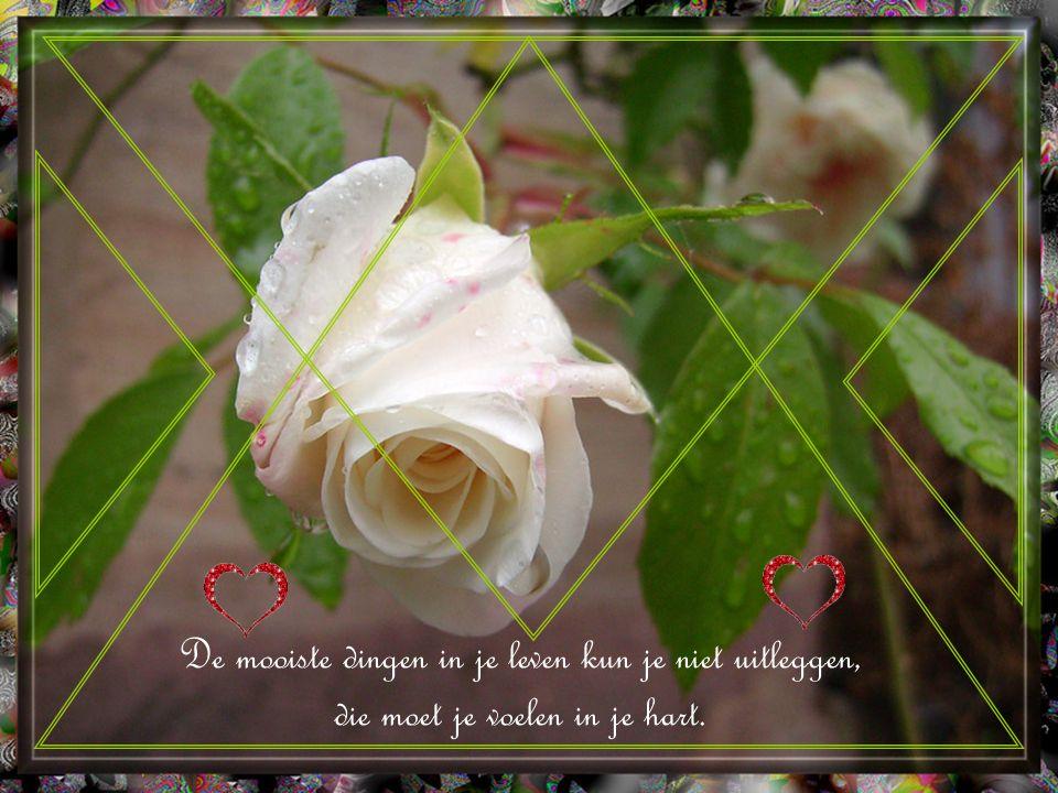 Als het hart niet meer gelooft en hoopt, dan is de liefde nog de redding!