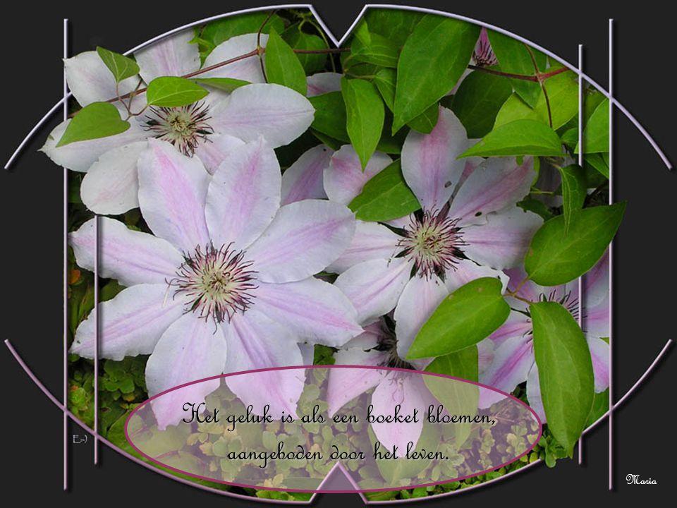 Het geluk is als een boeket bloemen, aangeboden door het leven. Maria