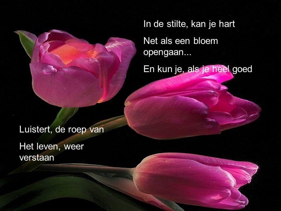 In de stilte, kan je hart Net als een bloem opengaan...