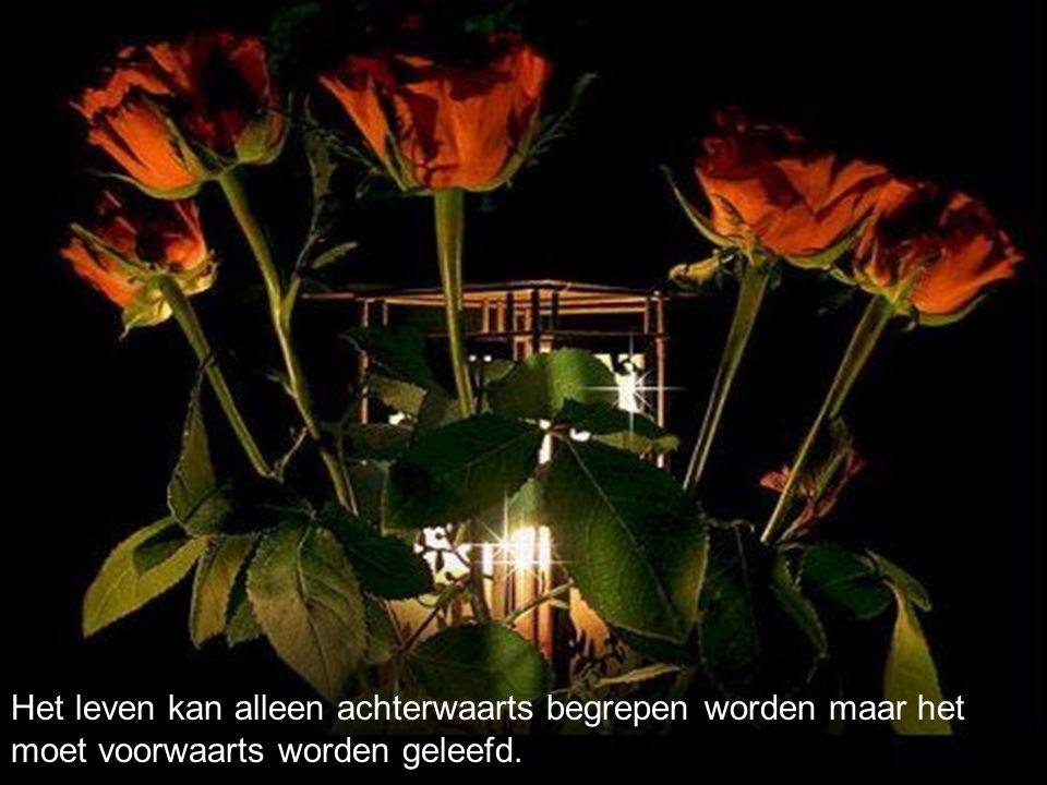 In de stilte, kan je hart Net als een bloem opengaan... En kun je, als je heel goed Luistert, de roep van Het leven, weer verstaan