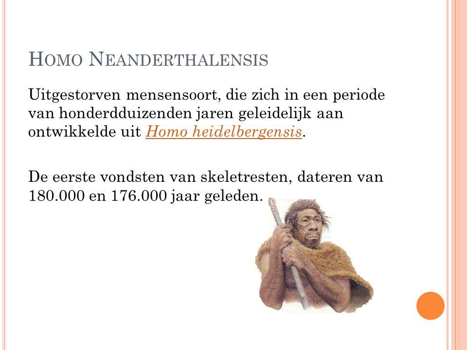 H OMO N EANDERTHALENSIS Uitgestorven mensensoort, die zich in een periode van honderdduizenden jaren geleidelijk aan ontwikkelde uit Homo heidelbergen