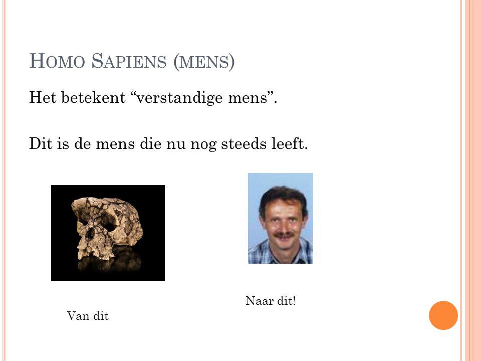 H OMO S APIENS ( MENS ) Het betekent verstandige mens .