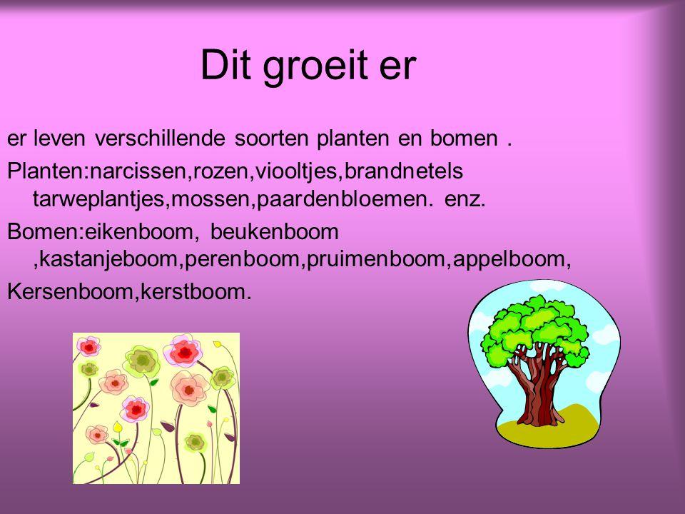 Dit groeit er er leven verschillende soorten planten en bomen.