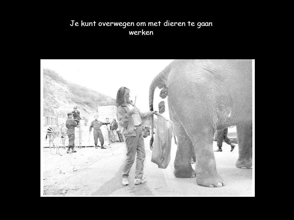 Je kunt overwegen om met dieren te gaan werken