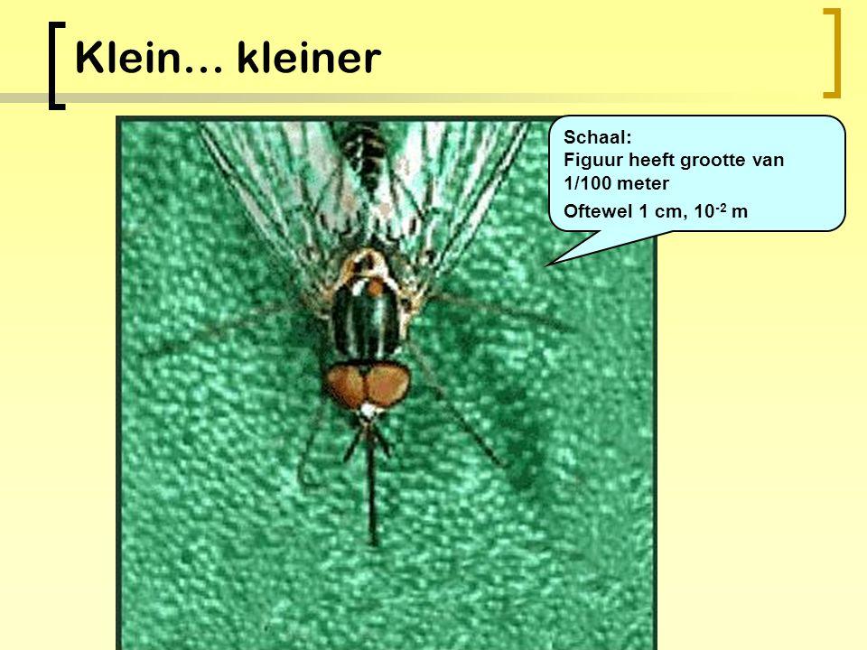 Klein… Schaal: Figuur heeft grootte van 1/10 meter Oftewel 10 cm, 10 -1 m