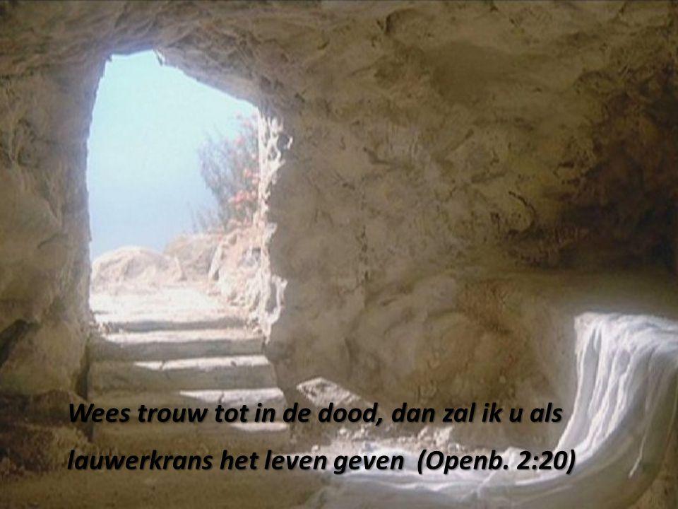 Wees trouw tot in de dood, dan zal ik u als lauwerkrans het leven geven (Openb. 2:20)