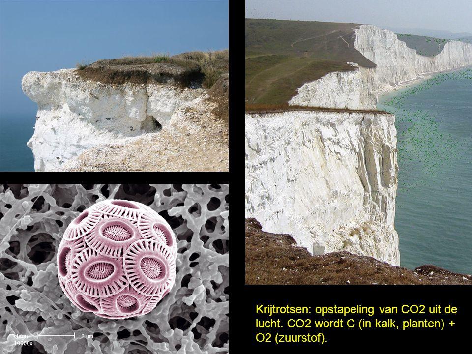 Krijtrotsen: opstapeling van CO2 uit de lucht. CO2 wordt C (in kalk, planten) + O2 (zuurstof).