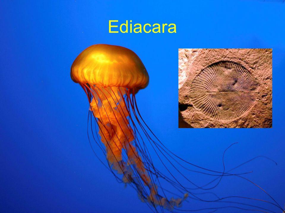 Ediacara