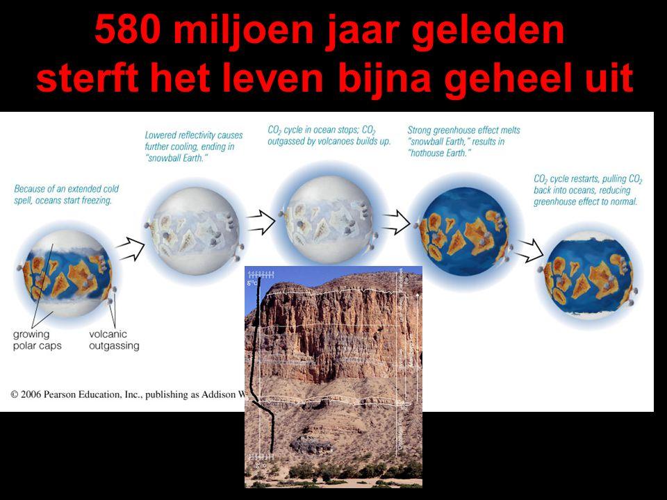 580 miljoen jaar geleden sterft het leven bijna geheel uit