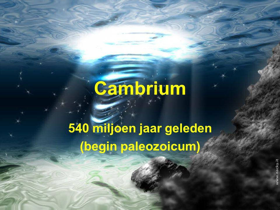 Cambrium 540 miljoen jaar geleden (begin paleozoicum)