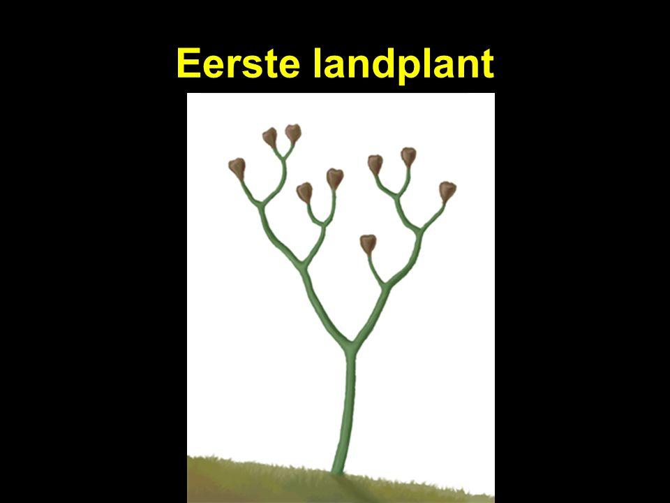 Eerste landplant