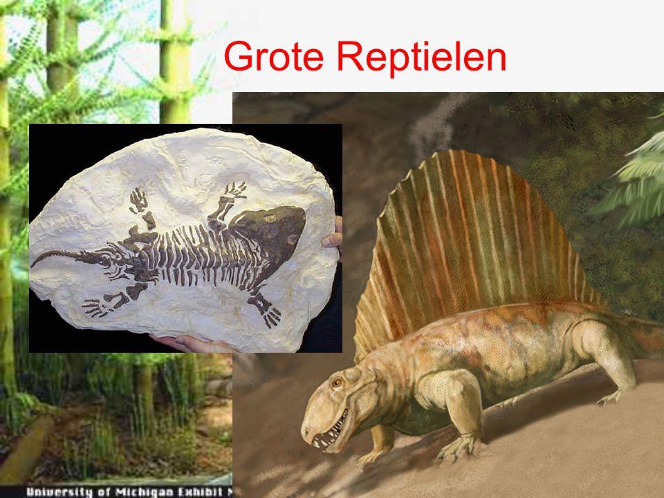 Grote Reptielen