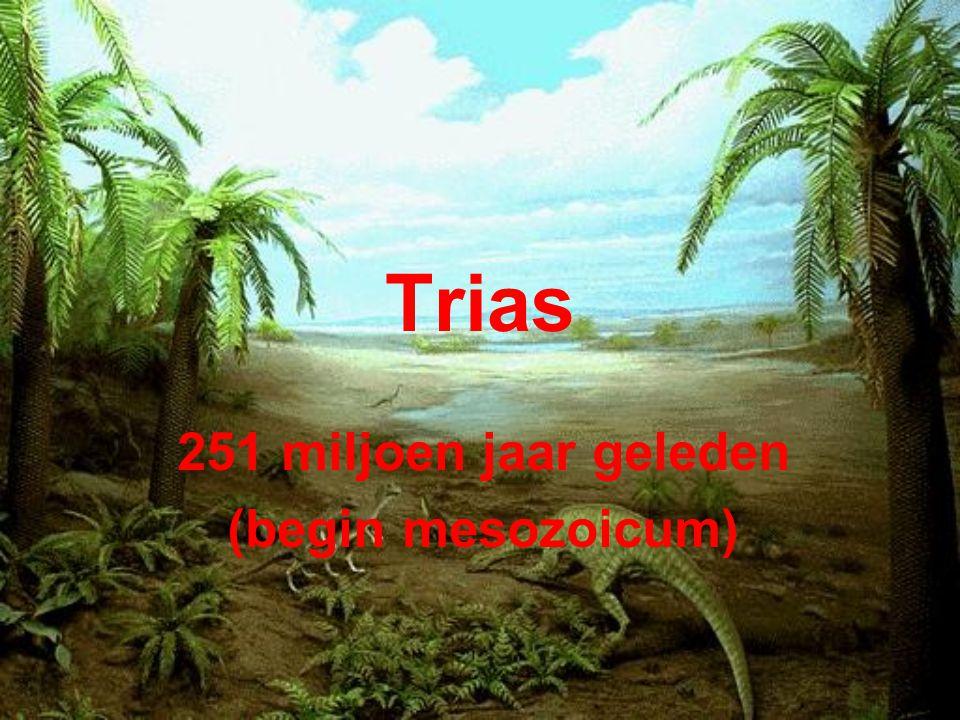 Trias 251 miljoen jaar geleden (begin mesozoicum)
