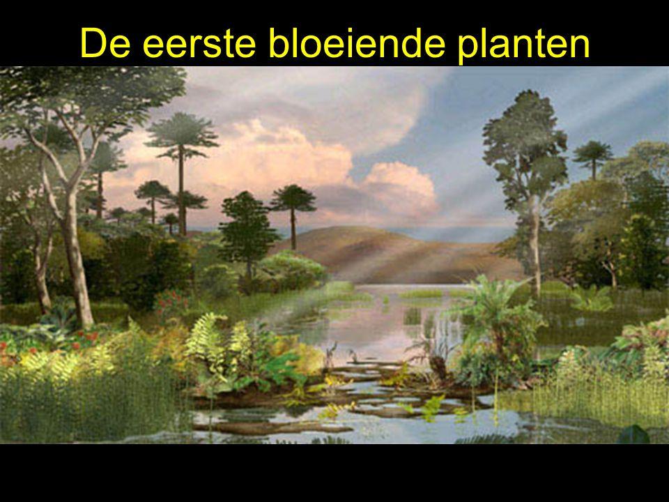 De eerste bloeiende planten