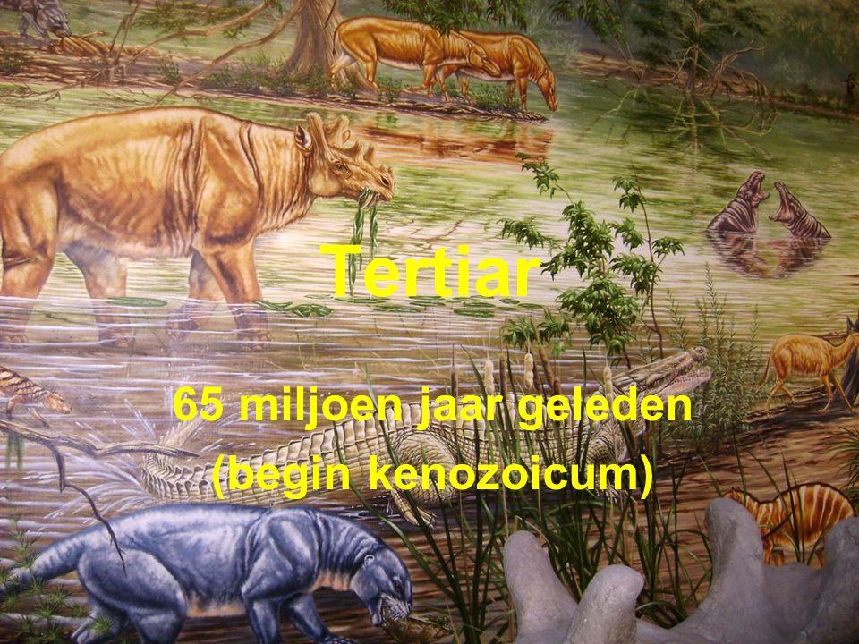 Tertiar 65 miljoen jaar geleden (begin kenozoicum)