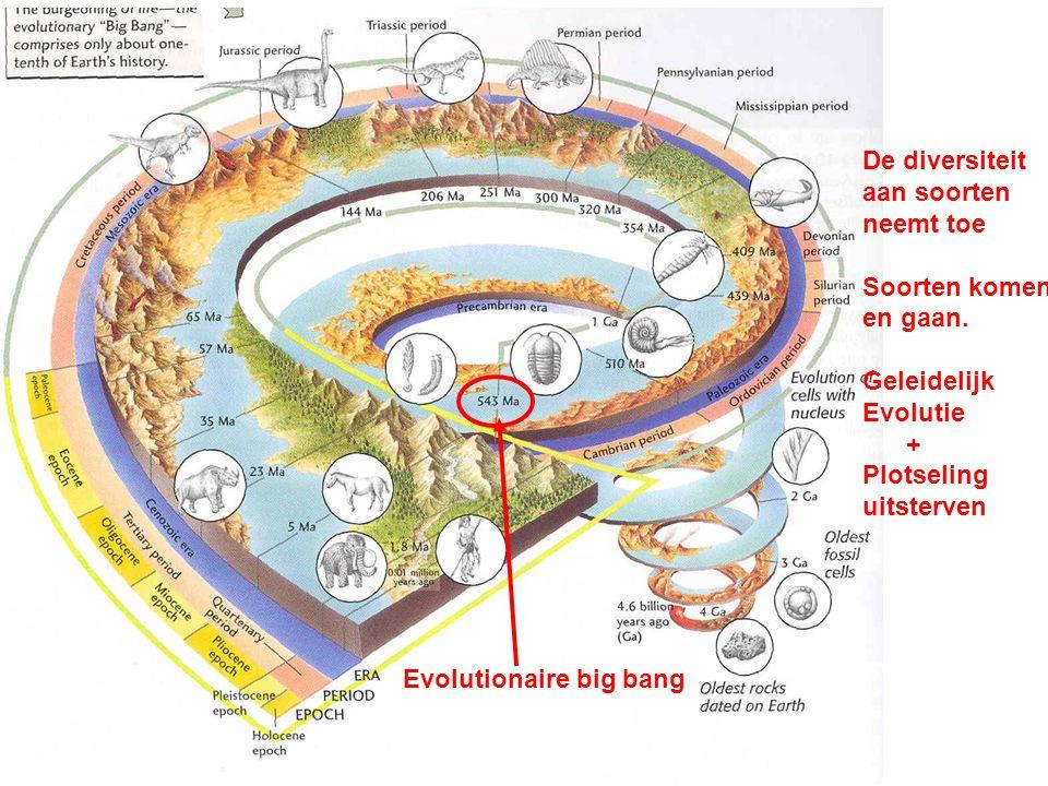 Evolutionaire big bang De diversiteit aan soorten neemt toe Soorten komen en gaan. Geleidelijk Evolutie + Plotseling uitsterven